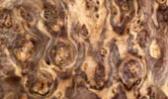 Nussbaum Wurzel Maser