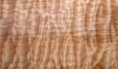 Ahorn Muschel Quilted Maple