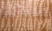 Ahorn Muschel Quilted Maple
